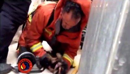 Fallece uno de los dos cachorros atendidos por los bomberos tras el incendio en un bajo de Sagunt