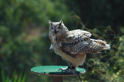 Málaga.- Turismo.- Selwo Aventura celebra el Día Mundial de las Aves con actividades para dar a conocer estas especies
