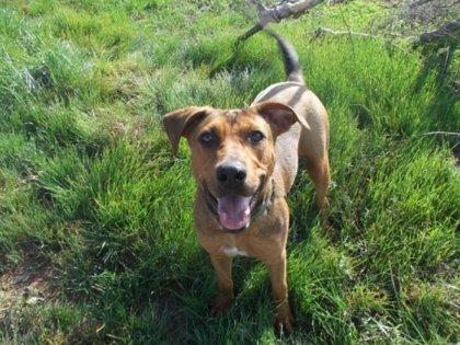 La protectora de Paterna pide que la gestión no se conceda a una perrera y se priorice la protección animal
