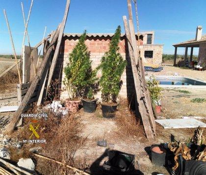 La Guardia Civil localiza 17 plantas de marihuana al investigar un delito urbanístico en Olivares