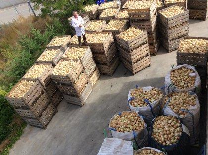 Embutidos de Cardeña adquiere el 8 por ciento de la producción de cebolla del Arlanza y Arlanzón