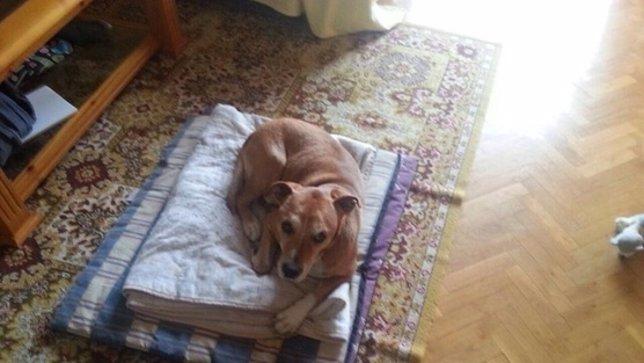 Excalibur, el perro de la enfermera contagiada de ébola
