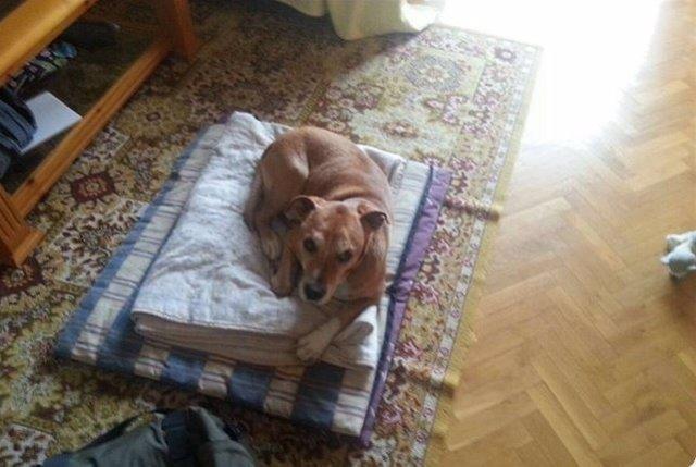 Excalibur, el perro de la enfermera con ébola