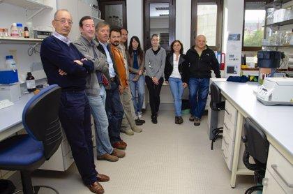 Descubren bacterias productoras de fármacos en ecosistemas de algas y corales del mar Cantábrico