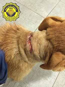 Perro herido por una cadena metálica