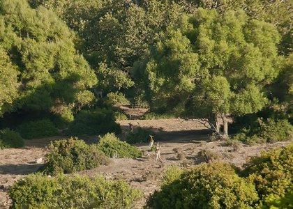 Ecologistas reclama a Susana Díaz una respuesta a la propuesta de declarar La Almoraima monte de dominio público