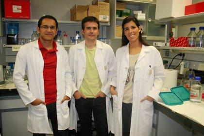 Avance en el conocimiento de dos proteínas supresoras de tumores
