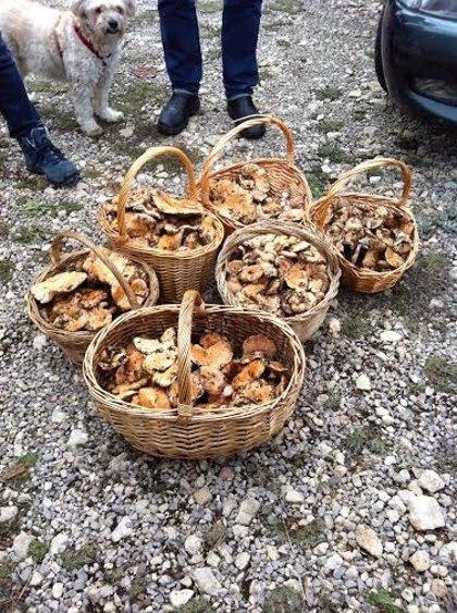 Empieza la temporada de recogida de hongos en Cuenca