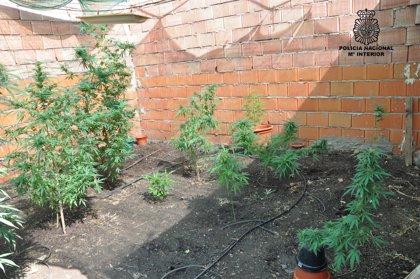 Detenidas dos personas en Puertollano (Ciudad Real) acusadas de cultivar y vender marihuana al por menor
