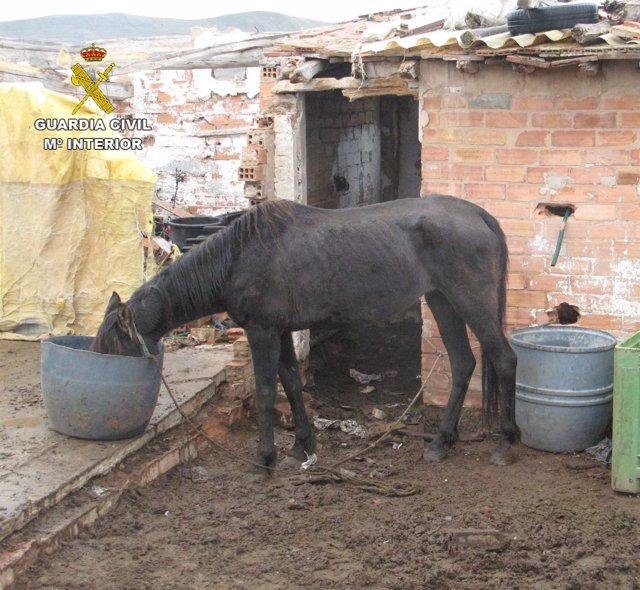 Animal recogido en mal estado por la Guardia Civil