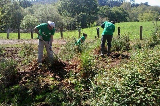 Programa voluntariado ambiental  Provoca
