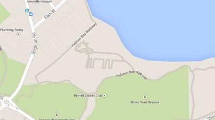 Aparece en Google Maps un misterioso gato en Auckland