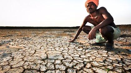 Un área de cultivo como Francia, degradado por la salinidad en  75 países