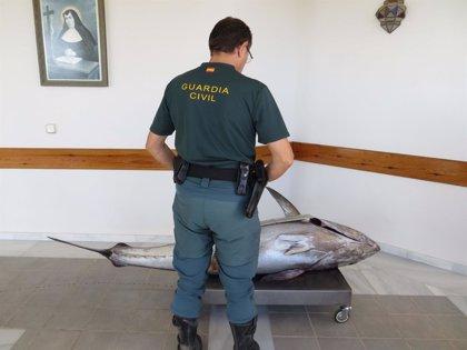 Intervenido un atún rojo de 90 kilos a un pescador profesional por su captura en época de veda