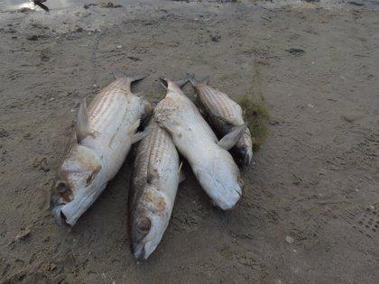 AE-Agró pide explicaciones a la Conselleria sobre la mortandad de peces en el lago artificial de la Devesa