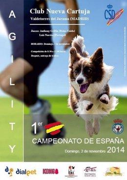 Primer campeonato de Agility en España