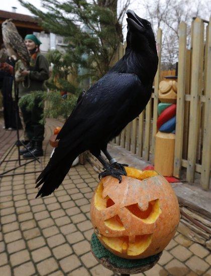 Consumo ofrece consejos básicos sobre la seguridad de los menores con los disfraces de Halloween