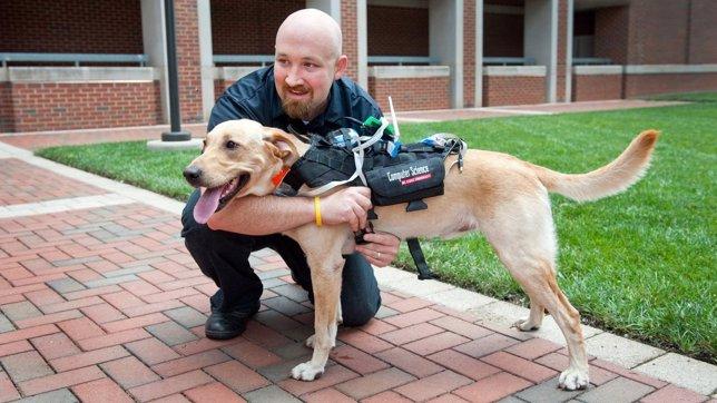 Arnés tecnológico para comunicación entre perros y humanos