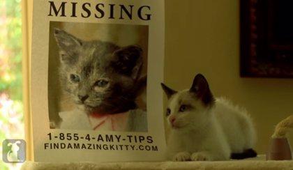 VÍDEO: Ben Affleck, un gato en la versión felina de Perdida