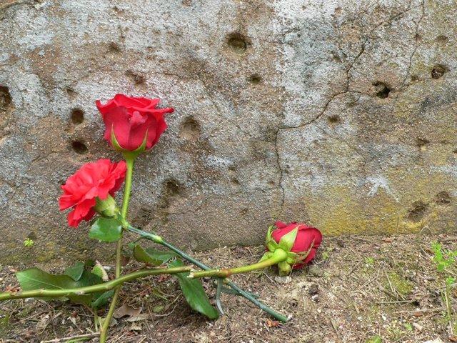 Rosas en el paredón de España de Paterna