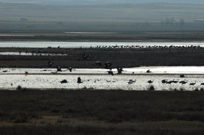 Comienzan las actividades ante la llegada de las grullas a la Laguna de Gallocanta