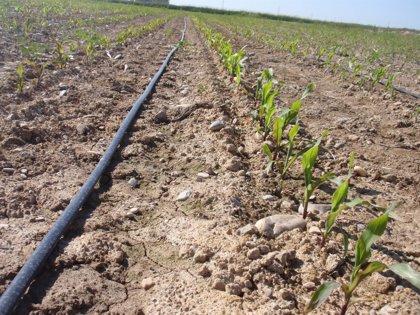 La Rioja, con un aumento del 7,4%, una de las regiones que más incrementó el volumen de agua de riego utilizado en 2012