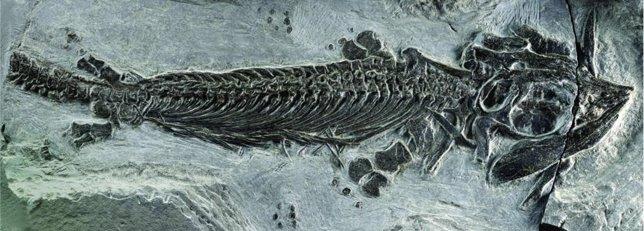Primer ictiosaurio