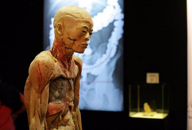 Un Cuerpo De La Exposición 'Human Bodies'