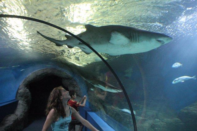 Tiburón en el Acuario de Almuñécar