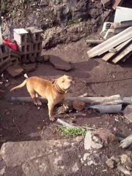Uno de los perros