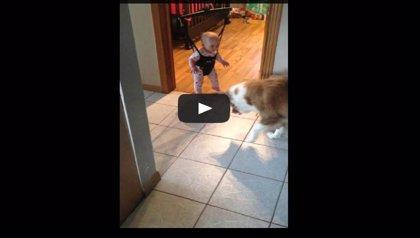 Perro profesor, bebé saltador