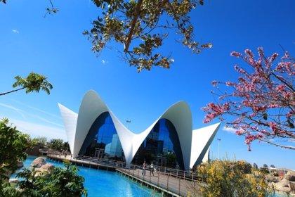 El Oceanogràfic celebra su visitante 15 millones con precios promocionales