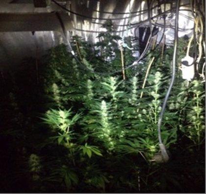Una discusión entre hermanos permite a la Policía localizar un criadero de marihuana en una casa