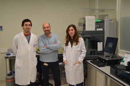 Investigadores de CIC bioGUNE y Universidad de Colorado (EEUU) desvelan cómo se desencadena la homocistinuria