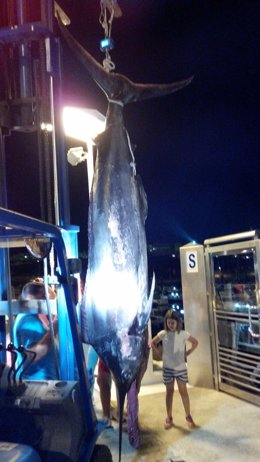 Ejemplar de marlín azul capturado en Mazagón (Huelva).