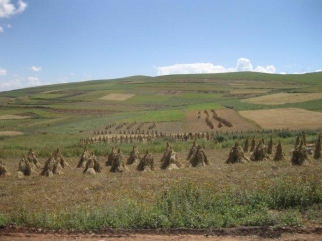 Agricultura en el Tíbet