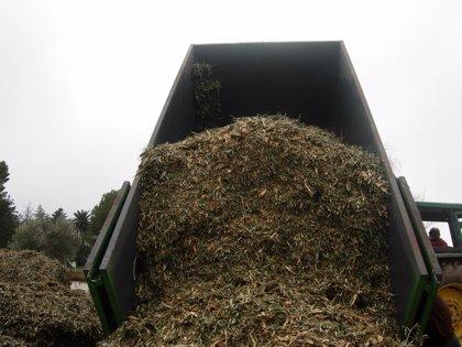 Expertos en biomasa afirman que la explotación de esta energía crearía 270 empleos directos en Murcia