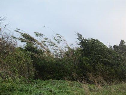 Nubosidad escasa y fuerte viento del sureste