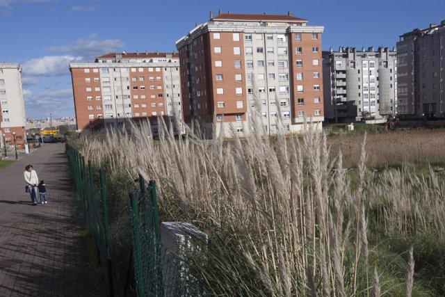 Plumeros junto a una urbanización