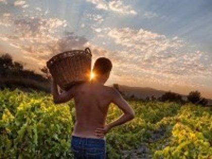 Los ganadores del concurso fotográfico 'Tu mejor vendimia' son de Tarancón, Villanueva de Alcardete y Valencia