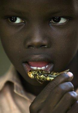 Gente comiendo insectos