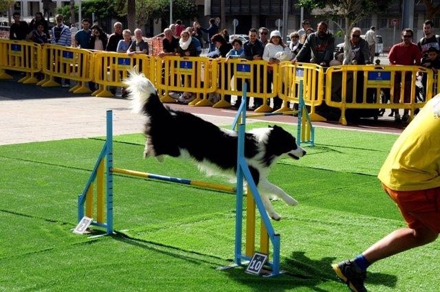Exhibiciónn canina