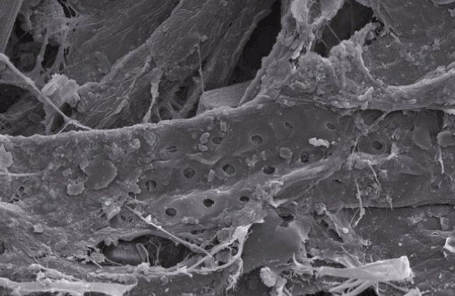El microscopio electrónico de la UCAM