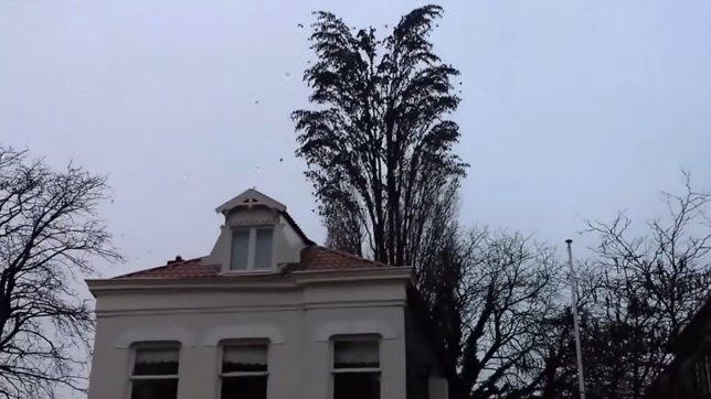La sorprendente transformación de un árbol