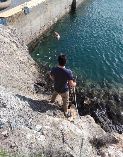 Rescatan los restos de un delfín listado en descomposición varado frente al Puerto de Almería
