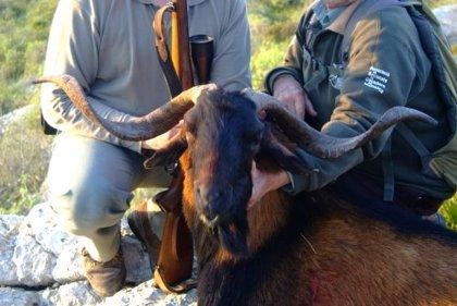 """El GOB pide al Ayuntamiento de Alcudia que recupere el control sobre La Victoria ante la """"mala gestión"""" de los cazadores"""