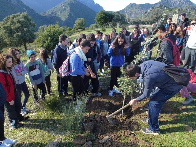 Plantación de escolares en el nuevo sendero del Parque Sierra de Grazalema