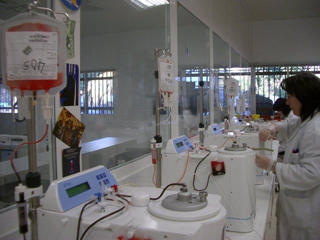 Andalucía en el primer ensayo sobre el uso de sangre de cordón umbilical