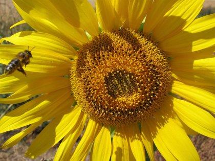 Los apicultores de la Cornisa Cantábrica reivindican su papel en la conservación de la biodiversidad