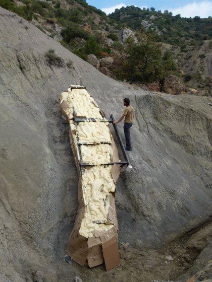 Extraen un cuello entero de dinosaurio de cinco metros en un pueblo de Lleida